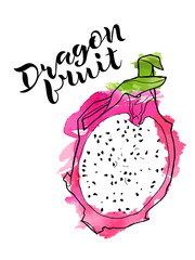 vector line illustration of dragon fruite half with watercolor abstract texture on white background and handwritten lettering. Isolated dragon fruit for label, menu, icon, banner.