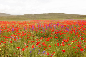 Nature fields and flowers