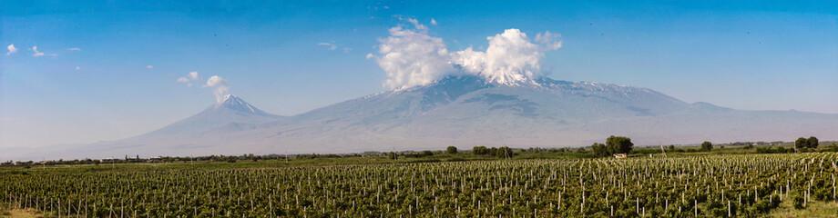 Vineyards and Ararat mountain panoramic view