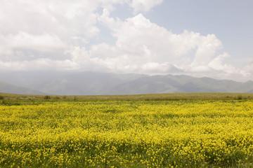 Armenian nature panoramic views, roads, villages and Ararat mountain