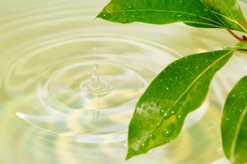 葉から落ちる水滴
