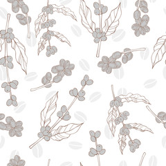 Vector seamless pattern with hand drawn  coffee  plants and beans