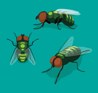 Fly Insect Cartoon Vector Illustration