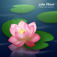 Lotus Flower Realistic Background