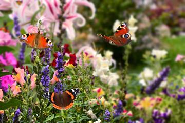 Schmetterling 509