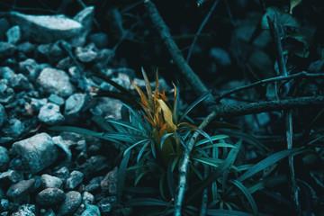 Close-up of helleborus foetidus plant