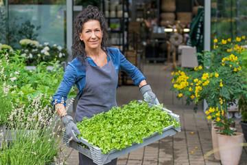 Gärtnerin trägt lächelnd eine Kiste frischer Pflanzensetzlinge