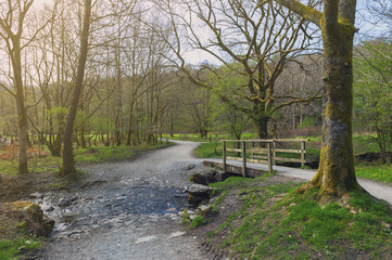 White Moss Walks, scenic forest recreational area by River Rothay in Ambleside, Lake District National Park in South Lakeland, England, UK