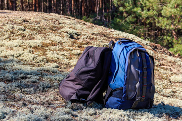 Two tourist backpacks on the glade in pine forest