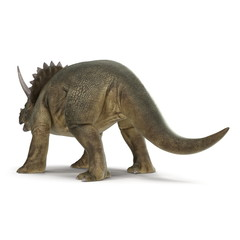 Triceratops dinosaur on white. 3D illustration