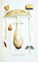 Illustration of mushrooms