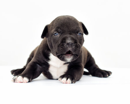 little puppy on a white background