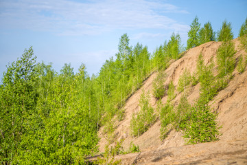 Picture of mountains with green birches