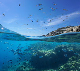 Seabirds flying in the sky and a shoal of fish with rocks underwater, split view above and below water surface, Mediterranean sea, Spain, Costa Brava, Catalonia
