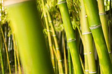 A Close-up of These Lush Bamboo