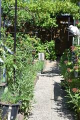 wilder Garten mit Weg
