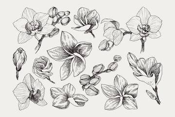 Big set of monochrome vintage flowers vector elements, Botanical flower decoration shabby chic illustration tropical orchid and plumeria isolated natural floral wildflowers leaves and twigs.