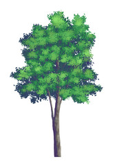 Trees digital painting illustrations White background.