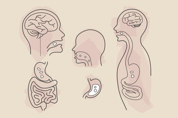 brain, stomach, large and small intestines digestive system eating food vector line art with color splashes