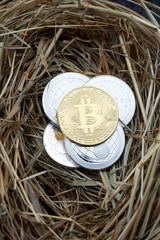 Kryptowährungen Crypto currencies in a nest