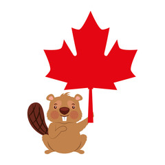 cute beaver cartoon holding maple leaf