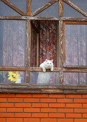 Photo of a macro funny white cat pops