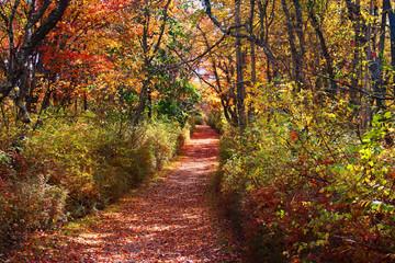 Autumn Path through woods