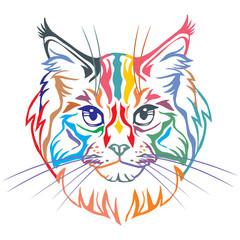 Colorful decorative portrait of Maine Coon Cat vector illustration