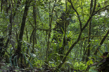 Lush temperate rainforest hosting tropical plants, trees, mosses, and bromelieads