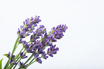 Keuken foto achterwand Lavendel Lavender flowers on a white background