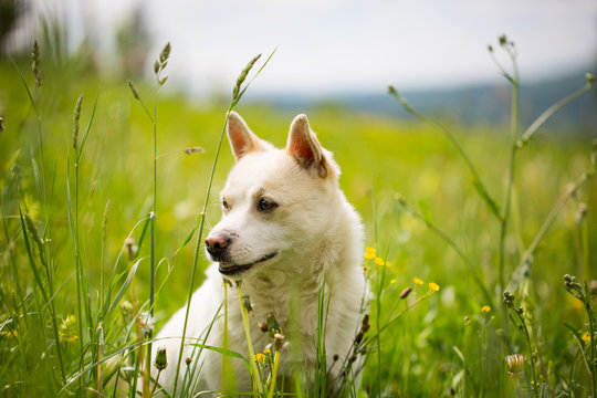 Cute brown-mixed dog in the meadow with tall grass, looking somewhere