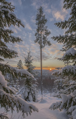 Winter scenery with forest at sunset