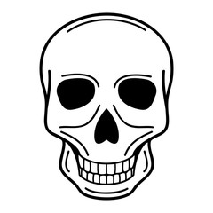 vector illustration of human skull on isolated background