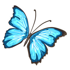 Cartoon butterfly with blue wings isolated on white background. Cartoon vector close-up illustration.
