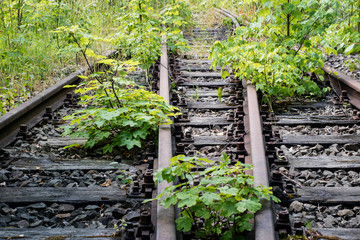Old railway tracks overgrown with trees. Forgotten railway line.