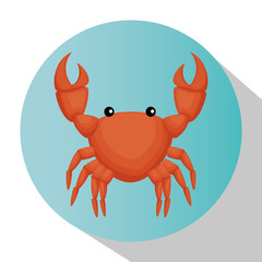 crab animal isolated icon vector illustration design