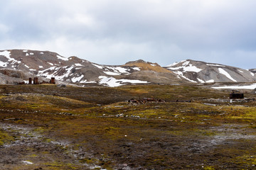 Nature of New London mining settlement, Svalbard archipelago