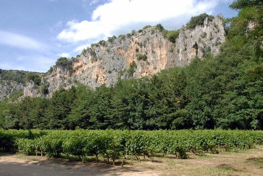 Montagne de l'Ardèche et vignes, département de l'Ardèche, France