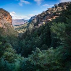 Blue Mountains Vista from Leura Cascades walking track, New South Wales, Australia