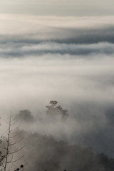 Fog above the forest in minimalist photography