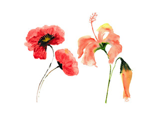 watercolor of poppy and hibiscus flower on white background, floral art, hand painted