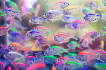 Fish in color in fresh water.