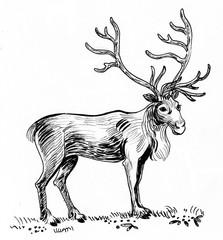 Reindeer. Ink black and white illustration