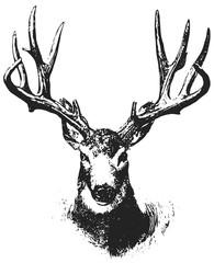 Mule Deer - Odocoileus hemionus #vector #isolated Hirsch (Maultierhirsch)