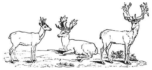 Deer #vector #isolated Hirsch