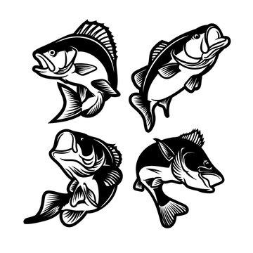set of big bass fish illustration for fishing logo. Fisherman logo. Fishing logo