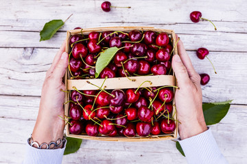 Freshly picked ripe sweet cherry in a basket.