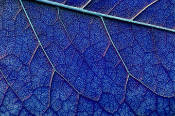 classic blue color abstract macro texture leaf close up