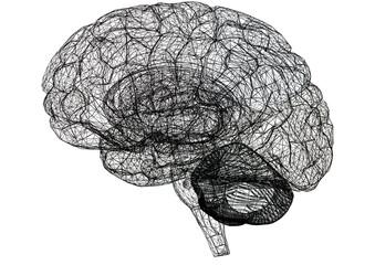 Brain Sketch – Blueprint - isolated