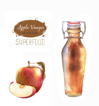 Hand-drawn watercolor illustration of apple cider vinegar isolated on the white background. Red apple and bottle of vinegar